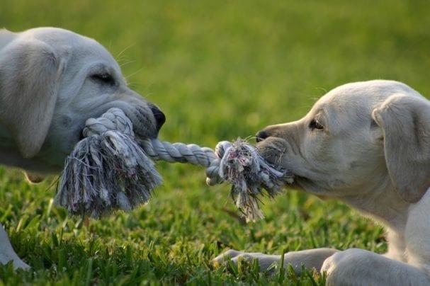 Resolving Conflict: Conflict Management